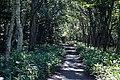 140829 Track Near Furepe Falls Shiretoko Hokkaido Japan03s3.jpg