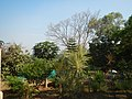 153Bangkal Abucay Palili Samal, Bataan Roads 44.jpg