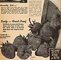 1938 planters guide (1938) (16484255649).jpg