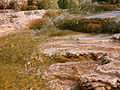 2003-08-19 Mammoth Hot Springs main terrace close-up 1.jpg