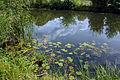 2009-07-29-finowkanal-by-RalfR-28.jpg