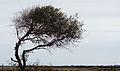 20111216-NRCS-LSC-0381 - Flickr - USDAgov.jpg