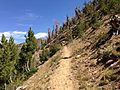 2013-08-09 11 39 05 View up the Cougar Mountain Trail while ascending Emerald Lake Pass in Nevada from Jarbidge Lake.jpg