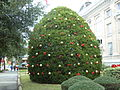 2013 Lowndes County Courthouse Christmas Tree.JPG