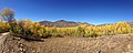 2014-10-04 13 09 23 Panorama of Aspens during autumn leaf coloration along Charleston-Jarbidge Road (Elko County Route 748) in Copper Basin about 7.3 miles north of Charleston, Nevada.jpg