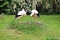2015-05-24 Vogelpark Marlow 06.jpg