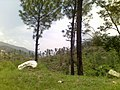 21072012167 tress are important for our environment.jpg