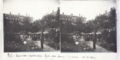 217- Exposition d'horticulture, Lyon, Place Carnot, Les rosiers.tif