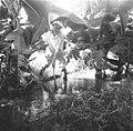 25 שנה לדגניה ב - בננות-ZKlugerPhotos-00132q0-907170685138476.jpg