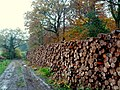 25th Nov 2014. Timber awaiting collection at the corner of Tinpit Hill and Bailey Lane alongside Coombland Wood, south-west of Newton St. Cyres, Devon. IMG 20141125 144829. - panoramio.jpg