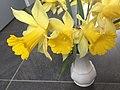 4325.Wilde.Narcis.Nieuwlande.UitWeiland.Afkokmstig.Narcisus.jpg