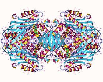 S-adenosylmethionine synthetase enzyme - S-adenosylmethionine synthase 2, tetramer, Human