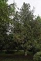 68-104-5042 Біота східна, Кам'янець-Подільський.jpg