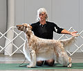AKC Fall Dog Show 2013 (9867216604).jpg