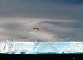 AP45 Tabular Iceberg (3423746242).jpg