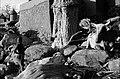 ASC Leiden - W.E.A. van Beek Collection - Dogon lifestock 05 - Emanuel Saye with a pack oxen of his father Dogolu Saye.jpg