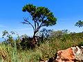 A árvore.JPG