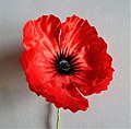A 2016 New Zealand Remembrance Poppy.jpg