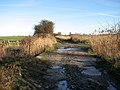 A culverted drain - geograph.org.uk - 1110312.jpg