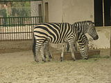 A view from kuwait zoo by irvin calicut (71).JPG
