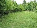 A woodland path - geograph.org.uk - 1395459.jpg