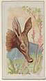 Aardvark, from the Wild Animals of the World series (N25) for Allen & Ginter Cigarettes MET DP836473.jpg