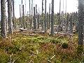Abgestorbener Wald.jpg