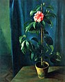 Adolf Erbsloh - Camellia (15932494282).jpg