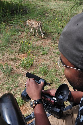 Nature documentary - Shooting of a wildlife film in Namibia