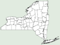 Agalinis auriculata NY-dist-map.png