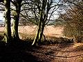 Alresford Lane by Cheriton Wood - geograph.org.uk - 696850.jpg
