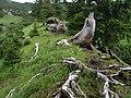 An der Baumgrenze Oberstdorf Aplen - panoramio.jpg
