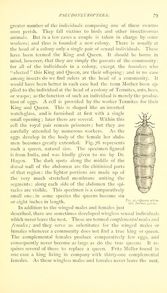 File:An introduction to entomology (Page 79) BHL9879395.jpg