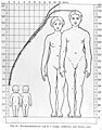 Anatomical chart showing male- female proportions. Wellcome M0000425.jpg