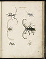 Animal drawings collected by Felix Platter, p2 - (17).jpg