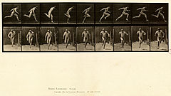 Animal locomotion. Plate 68 (Boston Public Library).jpg