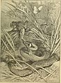 Animals in action; studies and stories of beasts, birds and reptiles; their habits, their homes and their peculiarities (1901) (14755077952).jpg