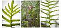 Antonio, el invernáculo y sus plantas (7190153869).jpg