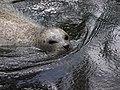 Antwerp Zoo (12210460384).jpg