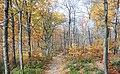 Appalachian Forest in Fall (22279148388).jpg
