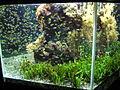 Aquarium-Monaco3.jpeg