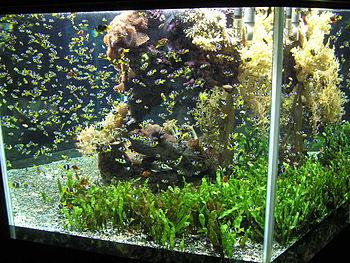 Acuario recipiente wikipedia la enciclopedia libre for Cria de peces en casa