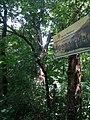 Arborele secular 01.jpg