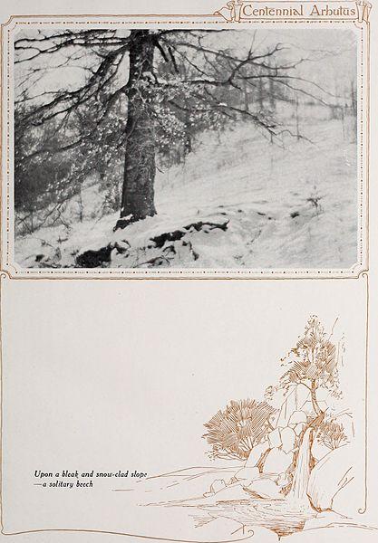 File:Arbutus (1921) (14765533635).jpg
