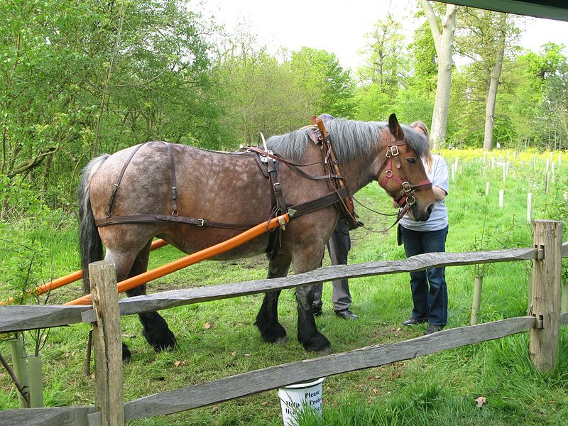 File:Ardennes horse.jpg