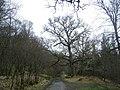 Ariundle oakwoods - geograph.org.uk - 418470.jpg