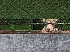 Arkaia - Perro detrás de una valla.jpg