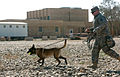 Army Training, For the Dogs DVIDS151315.jpg