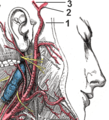 Arteria temporalis.png