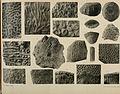 Atti della Reale Accademia delle scienze di Torino (1866-1927.) (20339180412).jpg